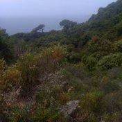 Chemin des cretes-AJACCIO-107