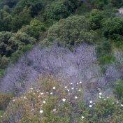 Chemin des cretes-AJACCIO-108