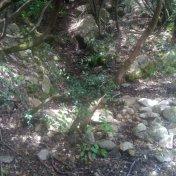 Chemin des cretes-AJACCIO-127