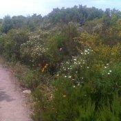 Chemin des cretes-AJACCIO-139