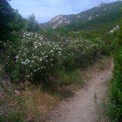 Chemin des cretes-AJACCIO-144