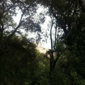 Chemin des cretes-AJACCIO- 155