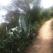 Chemin des cretes-AJACCIO- 179