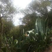 Chemin des cretes-AJACCIO- 180