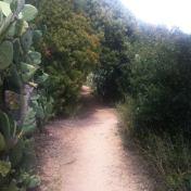 Chemin des cretes-AJACCIO- 186