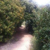 Chemin des cretes-AJACCIO- 187