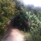 Chemin des cretes-AJACCIO- 188