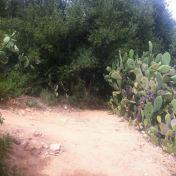 Chemin des cretes-AJACCIO- 189