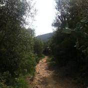Chemin des cretes-AJACCIO- 216