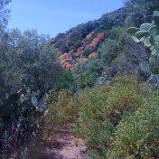 Chemin des cretes-AJACCIO-22