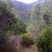 Chemin des cretes-AJACCIO-29