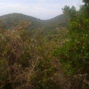 Chemin des cretes-AJACCIO-31