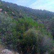 Chemin des cretes-AJACCIO-53