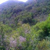 Chemin des cretes-AJACCIO-58
