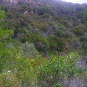 Chemin des cretes-AJACCIO-61