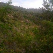 Chemin des cretes-AJACCIO-62