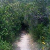 Chemin des cretes-AJACCIO-70