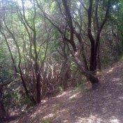 Chemin des cretes-AJACCIO-71