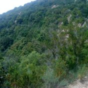 Chemin des cretes-AJACCIO-91