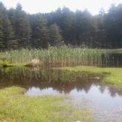 Lac de Creno- Corse-14
