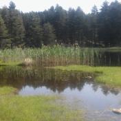Lac de Creno- Corse-15