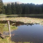 Lac de Creno- Corse-20