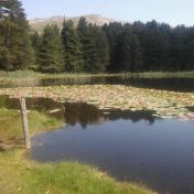 Lac de Creno- Corse-21