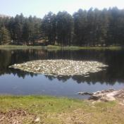 Lac de Creno- Corse-22