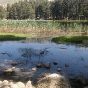 Lac de Creno- Corse-27
