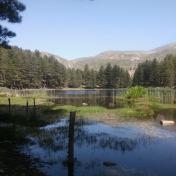 Lac de Creno- Corse-32